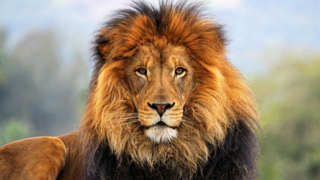 Big 5 Safari Tours