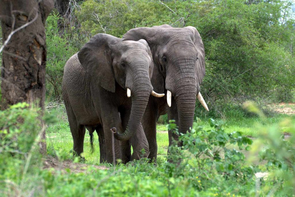 forest-elephant-conservation